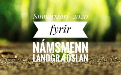 Sumarstörf 2020
