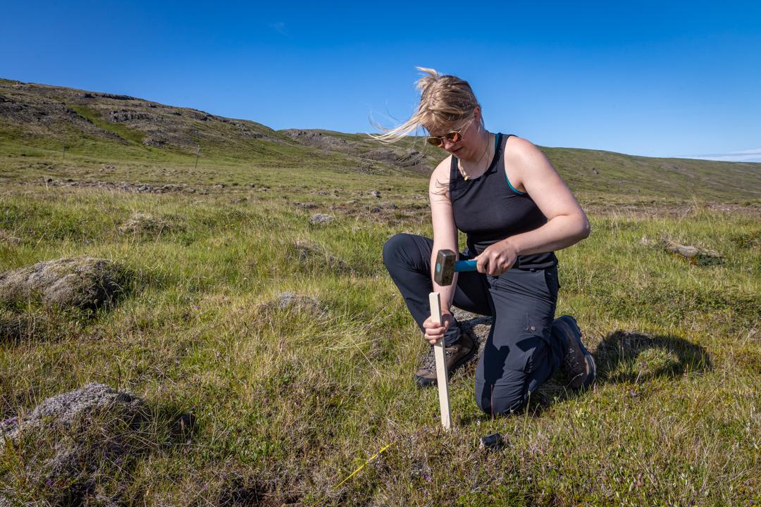 Freyja Ragnarsdóttir Pedersen mundar slaghamarinn af öryggi við niðursetningu hæla.